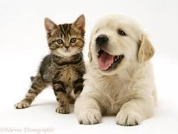 puppy kitten 2